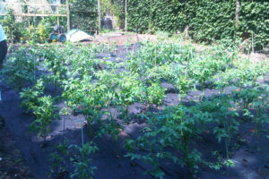 Food-For-Others-Garden-01-web