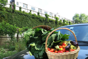 Food-For-Others-Garden-10-web