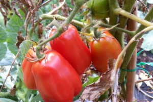 Food-For-Others-Garden-11-web