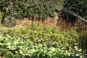 Food-For-Others-Garden-22-web