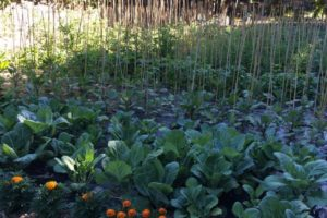 Food-For-Others-Garden-23-web